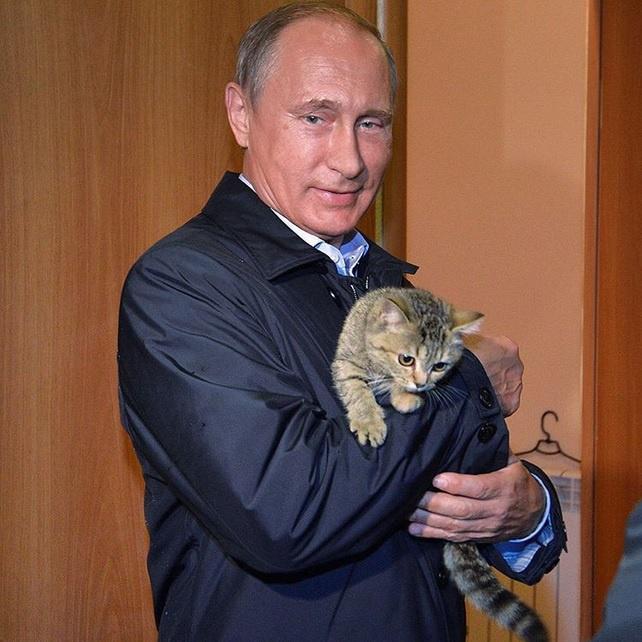 Котята, Путин и друзья России