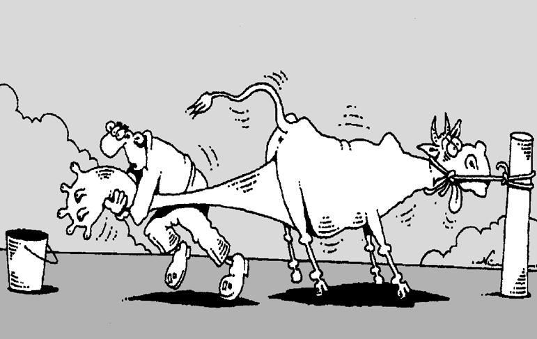 Открытки прикольные смешные про корову, доброе утро