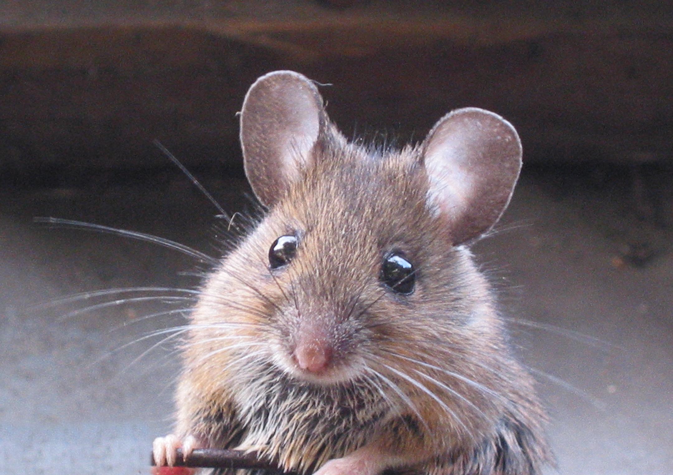 Мыши картинка, про наташку
