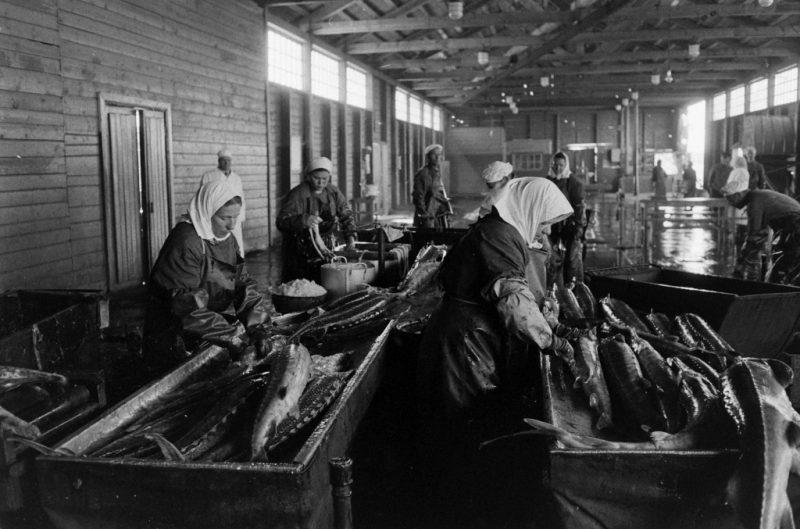 """Привет """"голодавшим"""" из СССР! Недоедали?Голодали? или Какая была Советская экономика и торговля."""