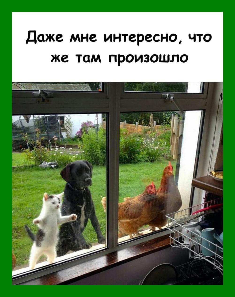 photo_2020-11-20_11-31-57%20%281%29.jpg
