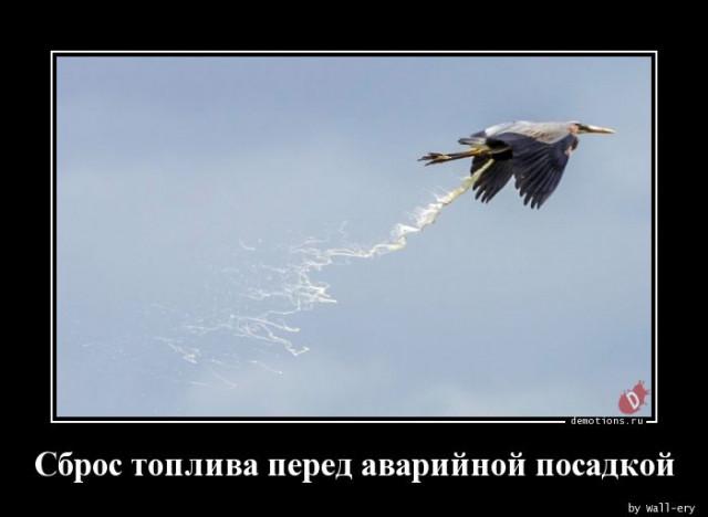 1590735348_demy-12.jpg