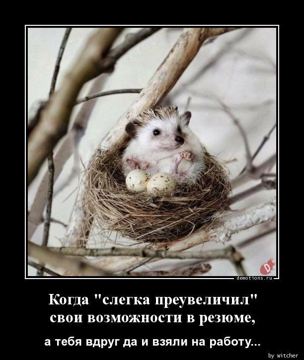 1590994713_demy-19.jpg