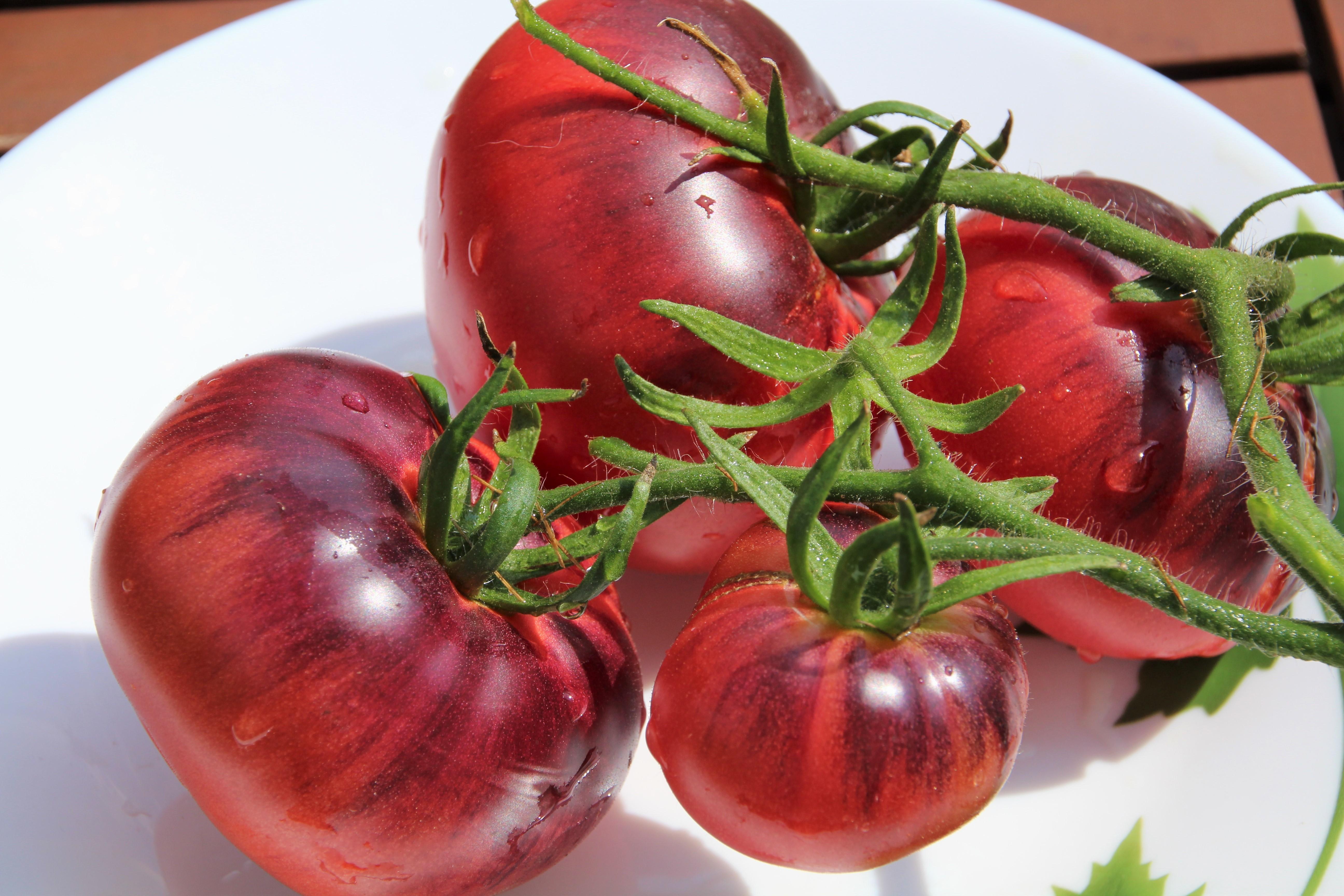 портрет редкие сорта помидоров фото это