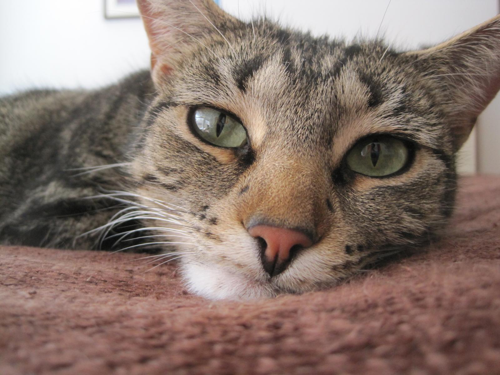 альтернативой этим картинка плачущего котенка вот