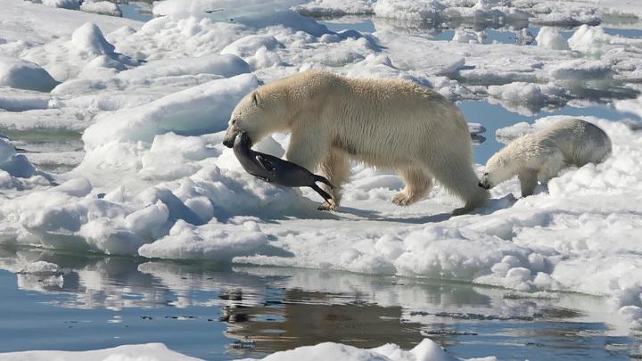 Флот НАТО пришёл за войной в Русскую Арктику.