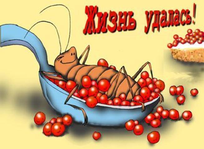 Лет свадьбы, открытка с тараканами