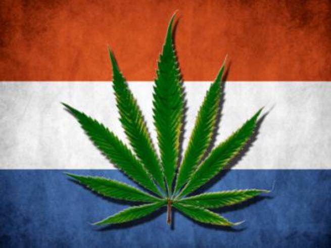 Голландия и конопля сша легализация марихуаны