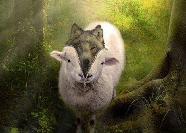 волк в овечьей шкуре картинки утверждает, что сидит