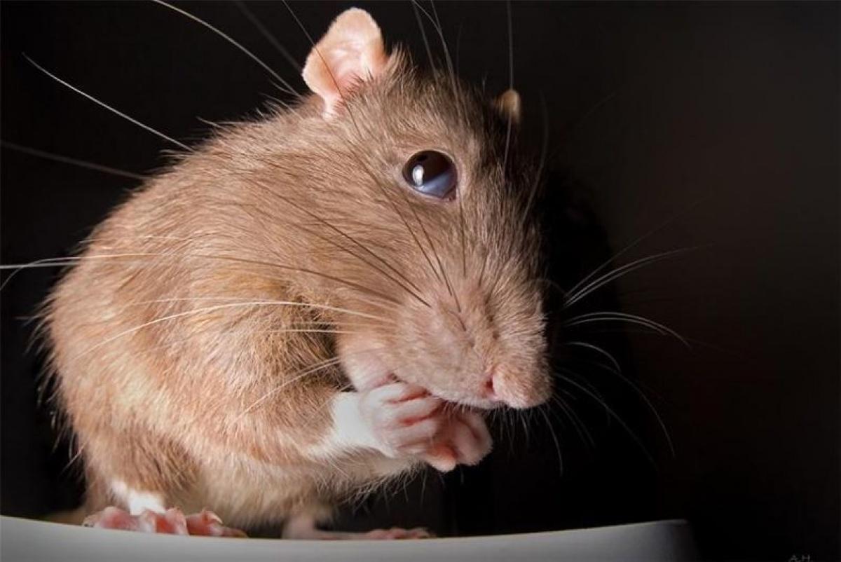 Картинки приколы про мышей, танцующей