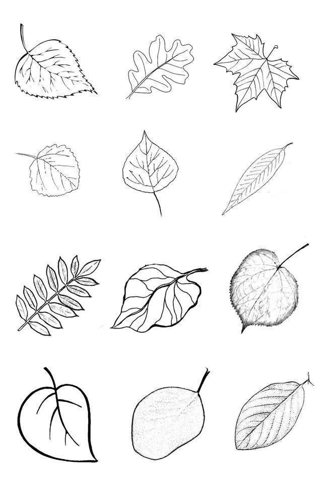 его виды деревьев в картинках их листья инструменты