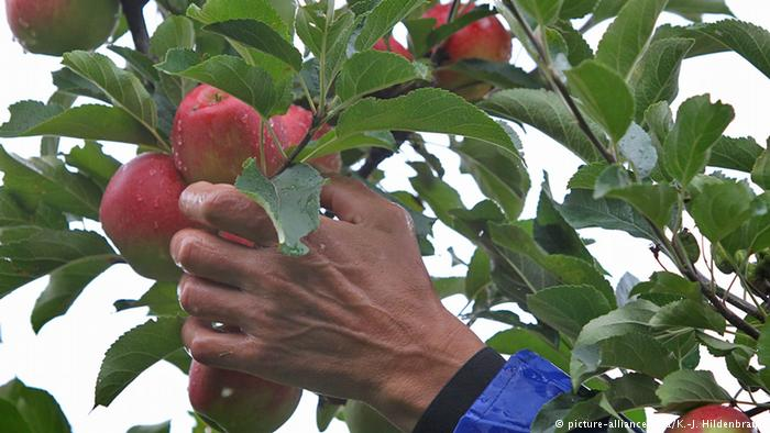 На яблоки в Польшу: «Тут тебе не Майдан!» | Блог Андрей Ваджра | КОНТ