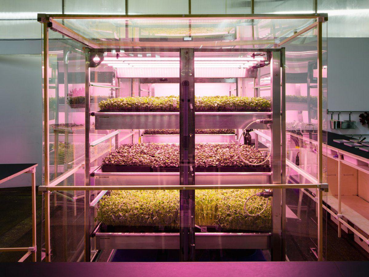 Бизнес на выращивании микрозелени своими руками в домашних 31