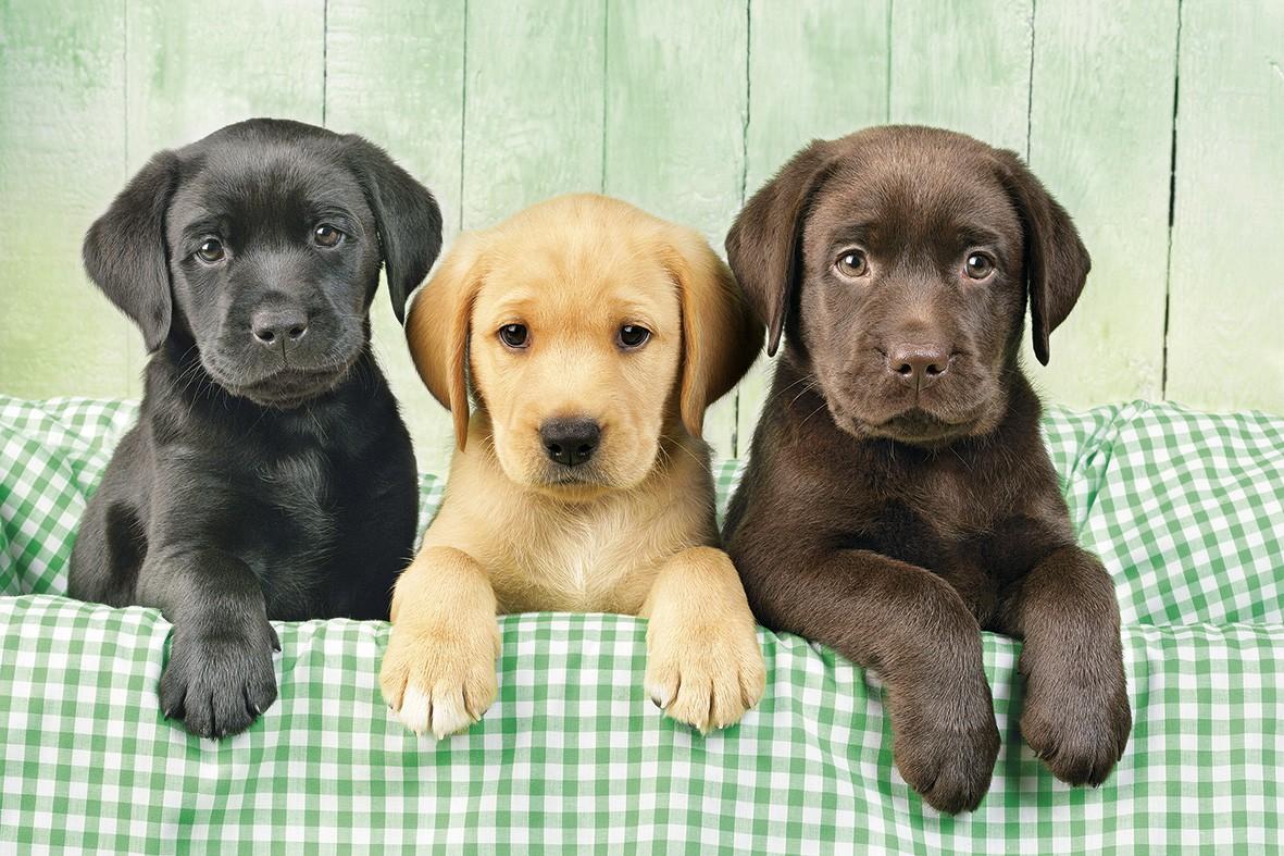 познавательный фото собак и как они называются тестовую охоту