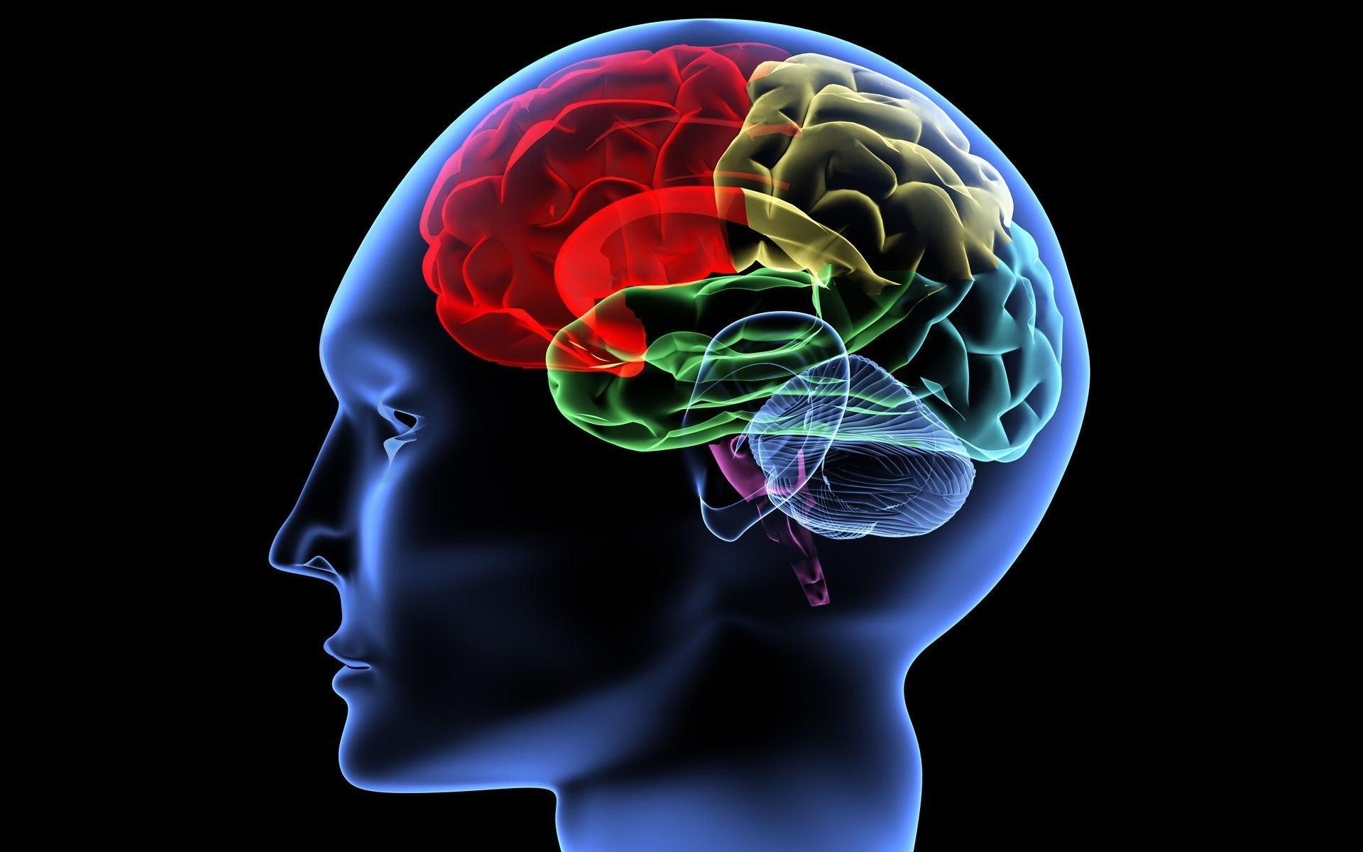 10 мифов нейрологии