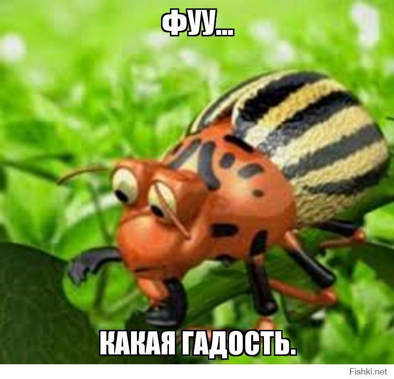 Прикольные картинки колорадского жука