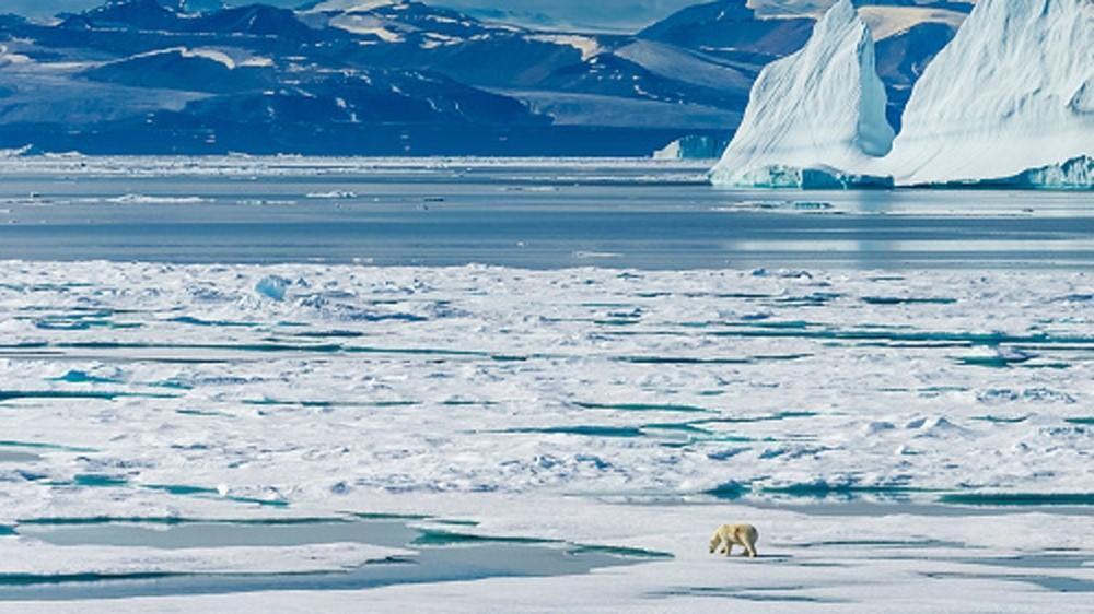картины арктики фото учится ушакова вслед
