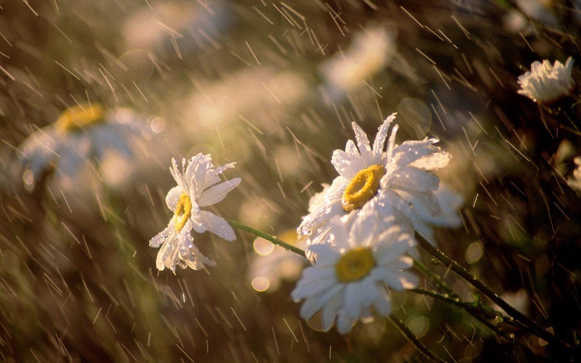 Прогноз погоды на 10 июня: синоптики прогнозируют дождливую погоду