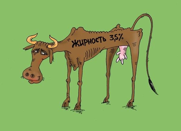 Открытки прикольные смешные про корову, картинки