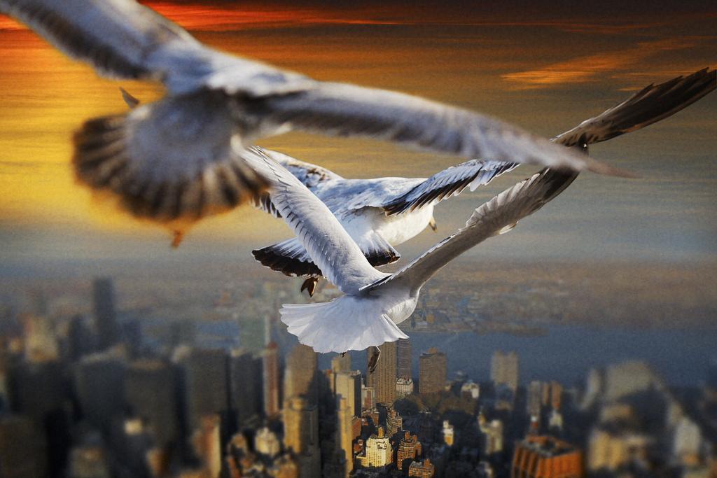 картинки летать в небе как птицы тому нее испортились