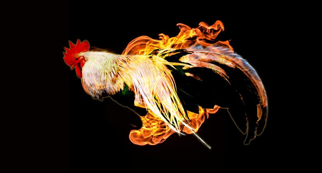 Огненный петушок картинки