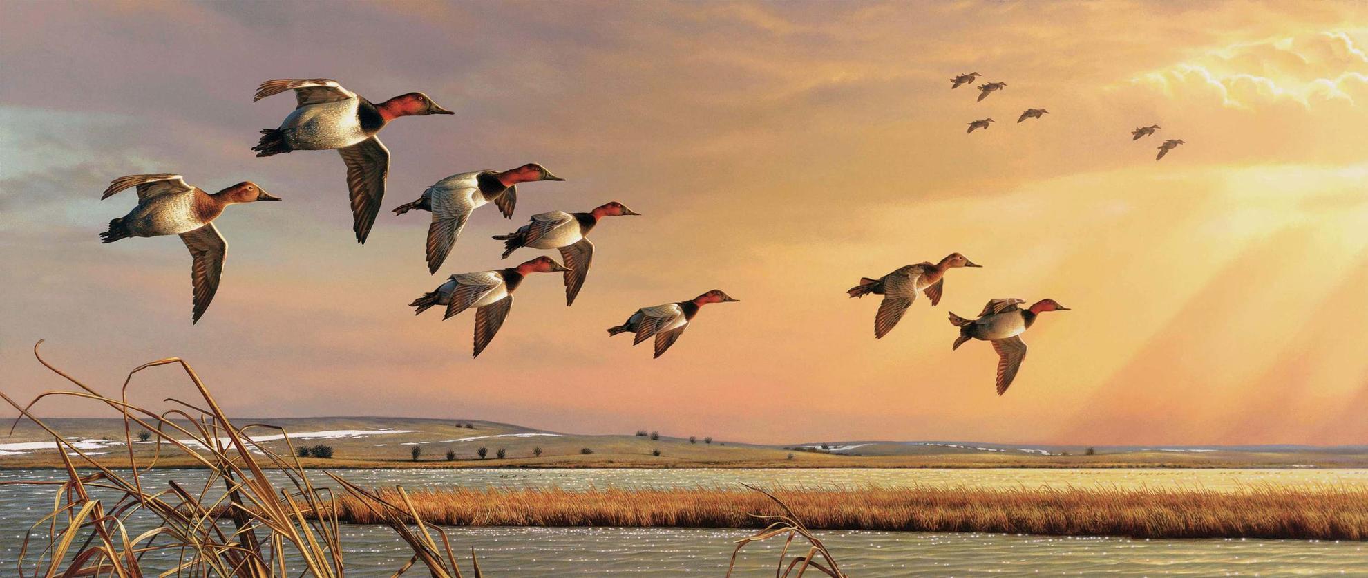 Дикие утки фото в небе